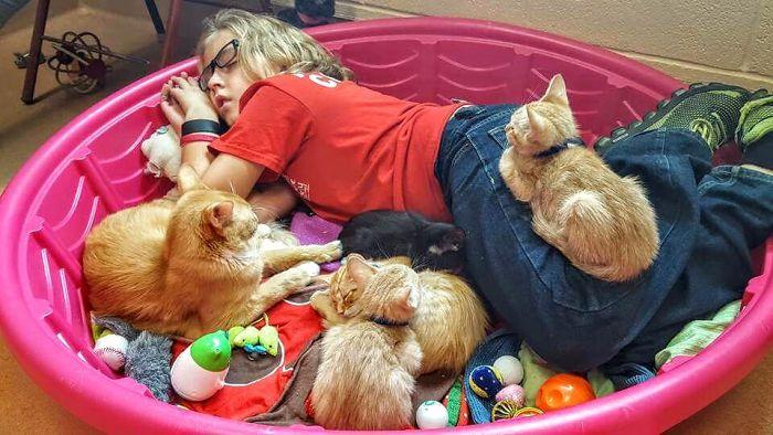 Voluntaria echándose una siesta con gatos