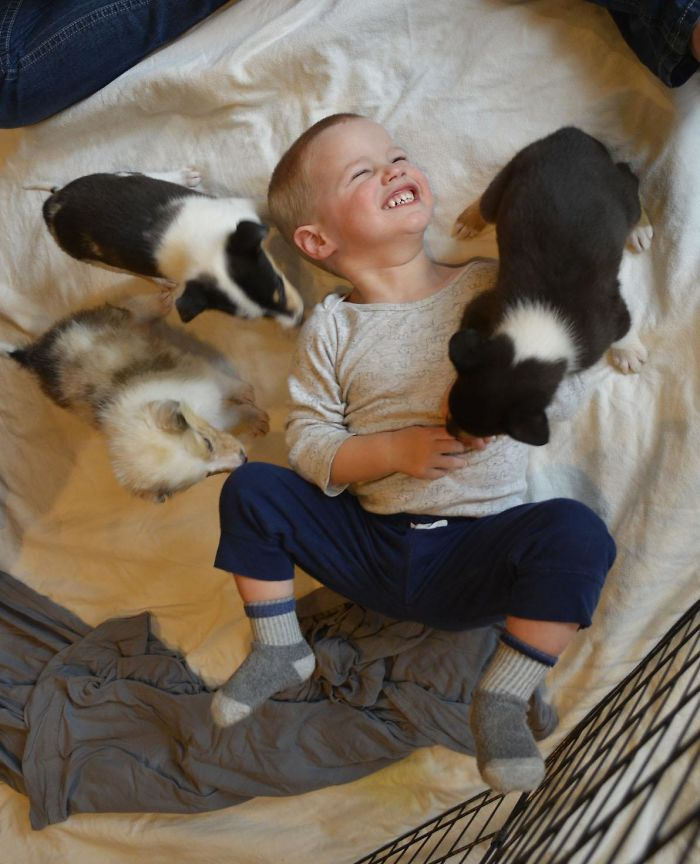 My Son Got To Participate In A Local Program For Children With Special Needs Called Pile Of Puppies Where They Literally Bring A Pile Of Puppies To Play With. He Got To Play With 5 Collies Only 6 Weeks Old, It's Been The Happiest We've Seen Him In A Long Time!