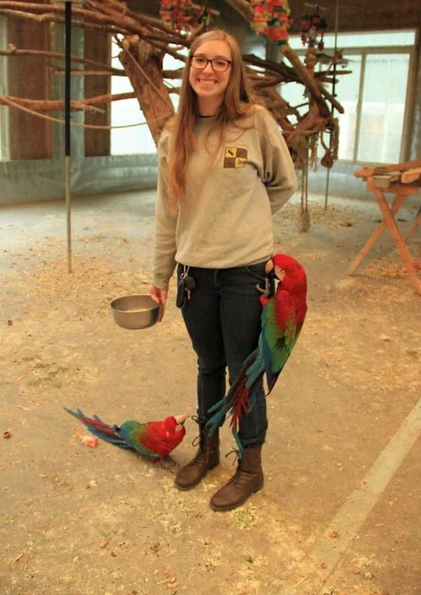 I Volunteer At A Parrot Sanctuary, And All The Birds Think Of Us As Human Jungle Gyms