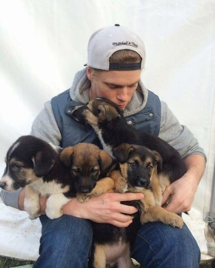 rescue dogs