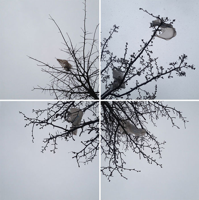 Blossoms: Collage Of Plastic Bag Photographs I Found In Nyc Trees