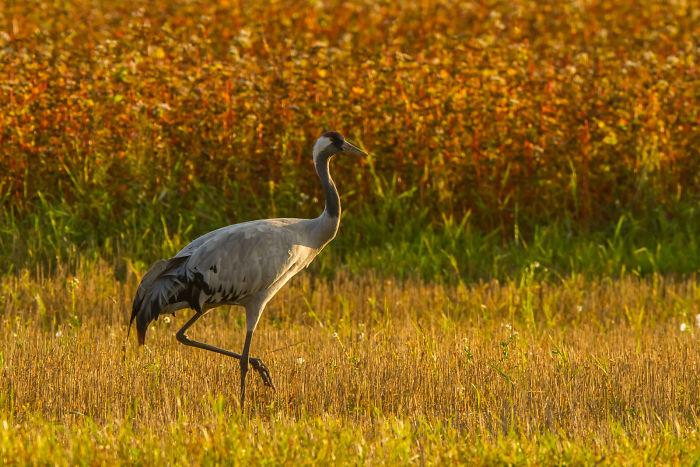 Beauty Of Lithuanian Birds