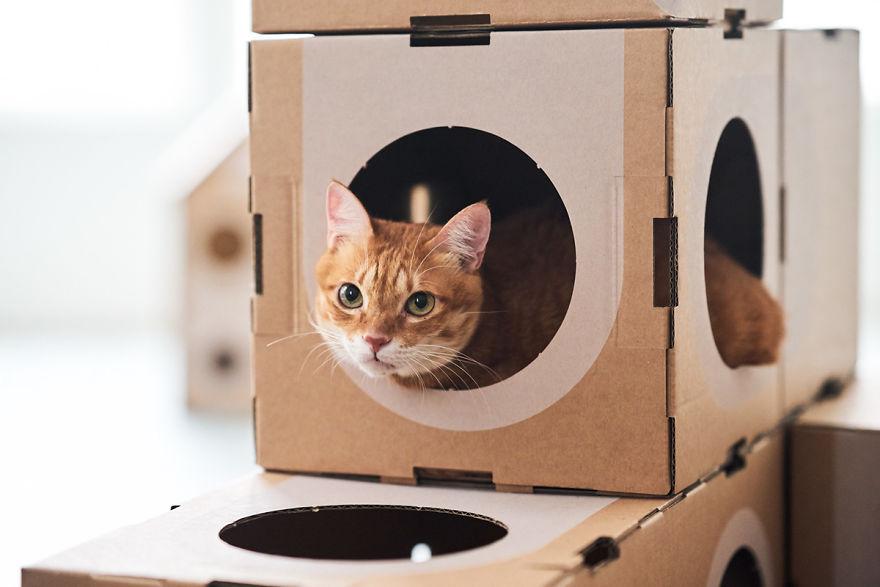 Cardboard Box Cat City