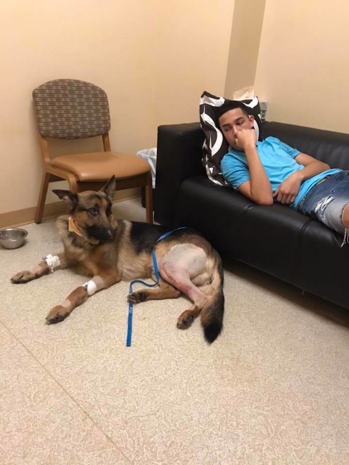 Brave Dog Gets Shot While Protecting His 16-Year-Old Owner From Armed Intruders