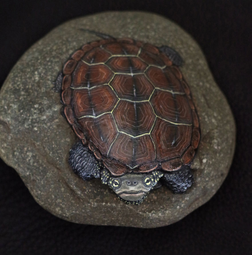Chinese Pond Turtle