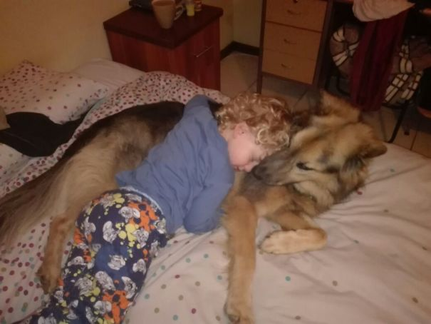 Our 6yo German Shepherd Cross Rescue With Our 4yo Son. They Love Each Other To Bits