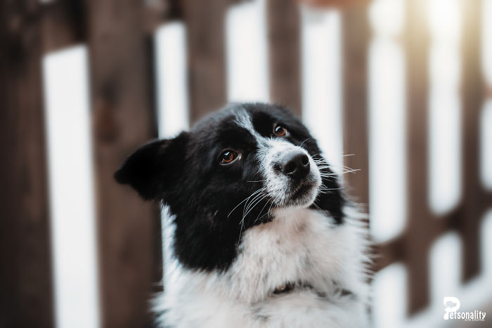 I Take Professional Photos For Abandoned Animals To Help Them Find A New Home