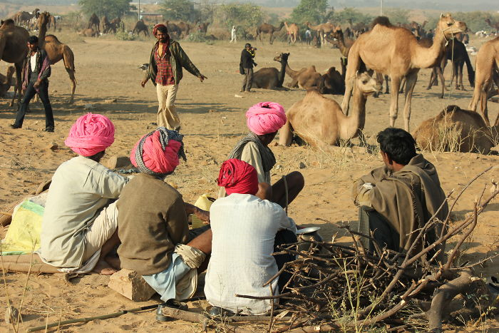 Turbans – Adding Color To The Drab Brownish Desert Landscape Of Pushkar, Rajasthan In India