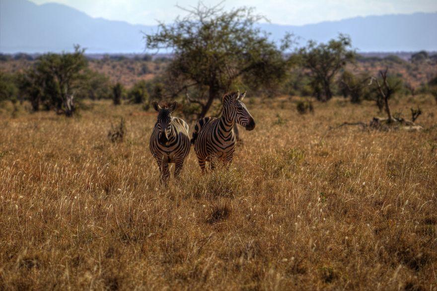 I Am Truly Amazed With Wild Animals In Kenya!