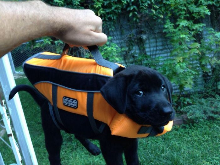 This Briefcase Contains Important Lab Results