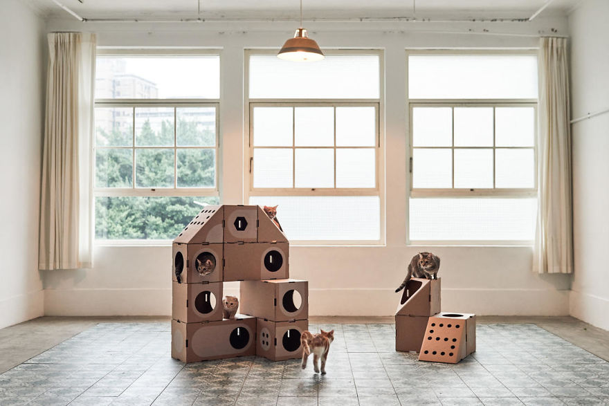 Architect Couple Turns Cardboard Boxes Into Stackable Cat Fort, And Here's How Cats React
