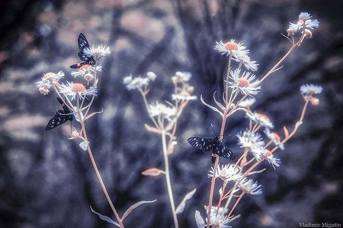 Mariposas y flores en el bosque de Chernobyl
