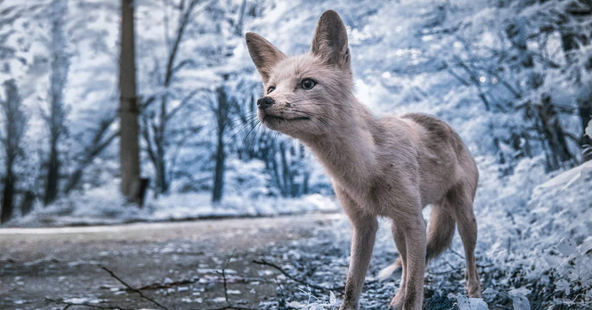Chernobyl Shot With Infrared Photography Looks More Haunting Than Ever (Interview)
