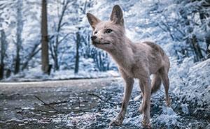 Chernobyl retratado con fotografía infrarroja parece más inquietante que nunca