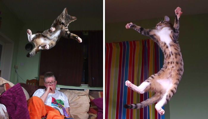20+ Evidences That Our Kitten Is A Part Kangaroo And Part Velociraptor