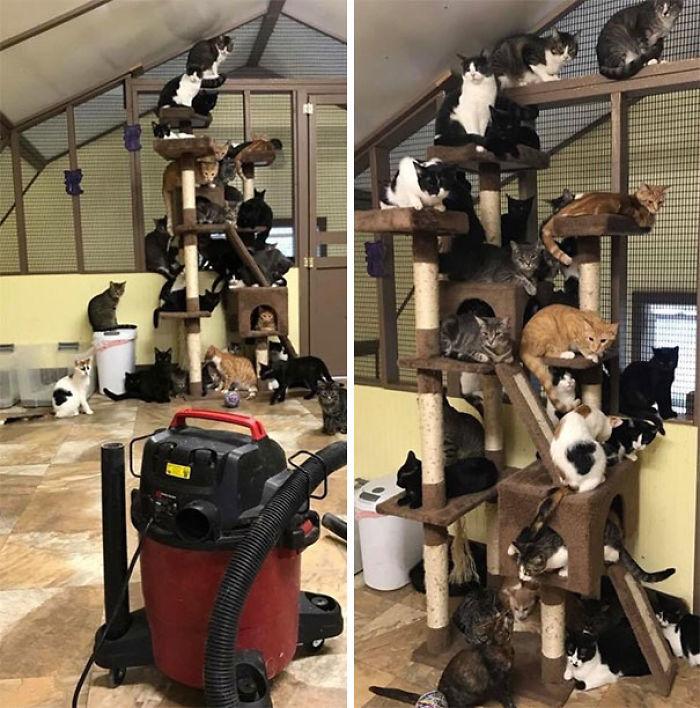 Cuando vamos a pasar la aspiradora en el refugio de gatos