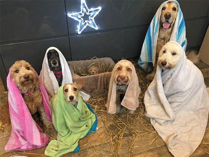 Practicando la escena navideña en el refugio