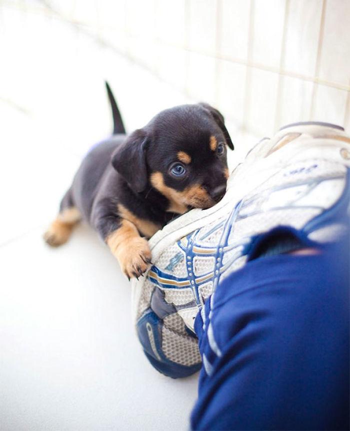 Estaba fotografiando perros en el refugio y de repente uno me atacó