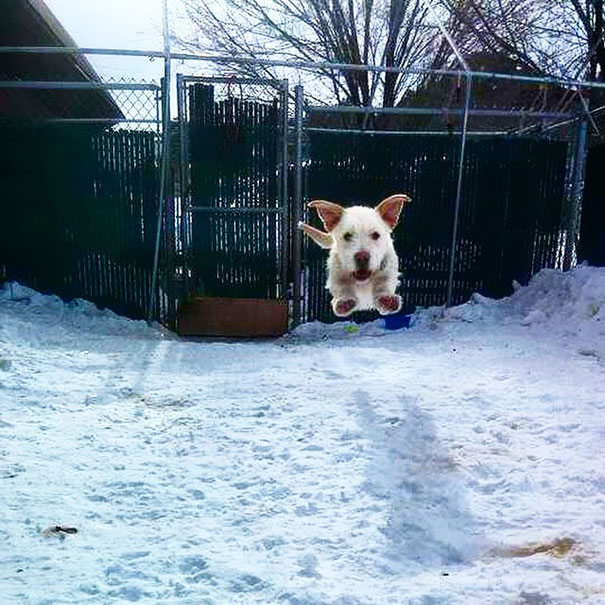 """""""Of Course Dogs Can Fly!"""" - Rio"""