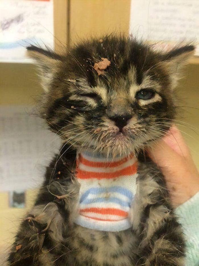Gatito tras su primera comida sólida