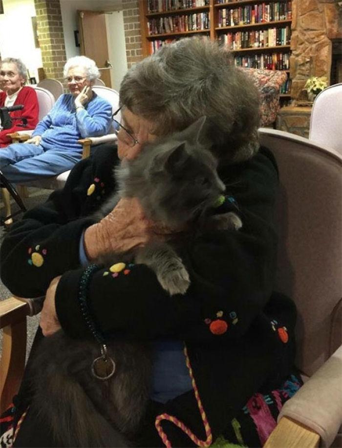 Este refugio lleva gatos ancianos a ver ancianos en asilos. La foto lo dice todo