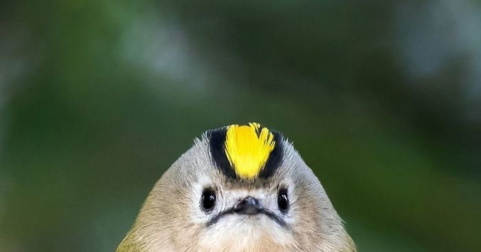 Finnish Photographer Shoots Real Life Angry Birds, And We Can't Finish Looking At Them