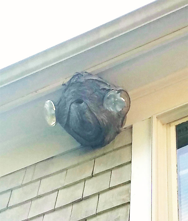 The Hornet's Nest Near My Roof Looks Like Admiral Ackbar