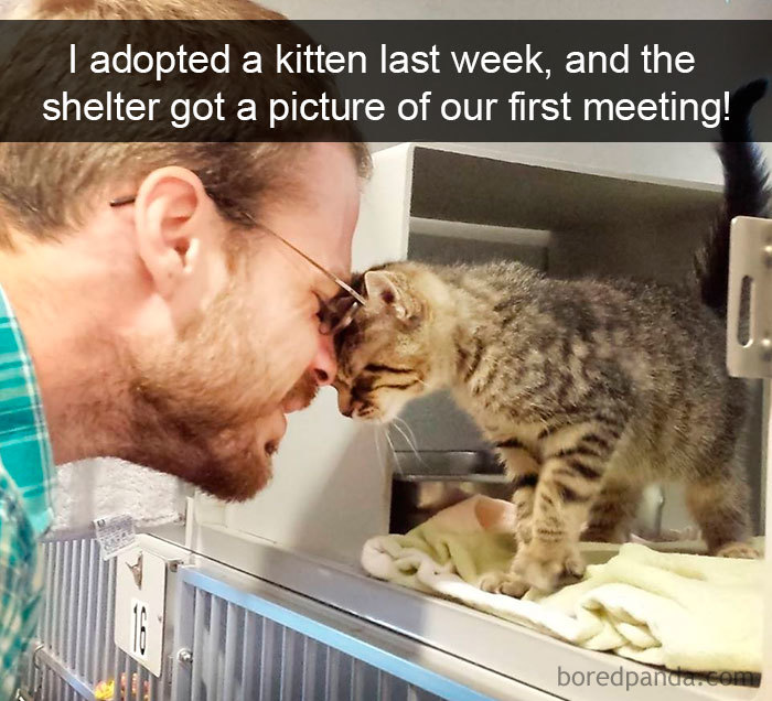 Image of: Cat Snapchats Snapchats Funny Cats Bored Panda 159 Hilarious Cat Snapchats That Will Leave You With The Biggest