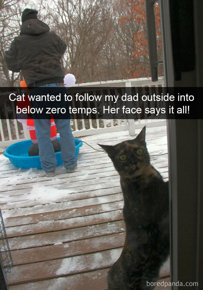 Snapchats Funny Cats