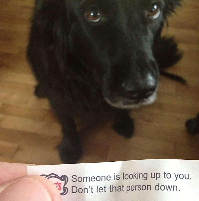 25+ Of The Funniest Messages Found Inside Fortune Cookies