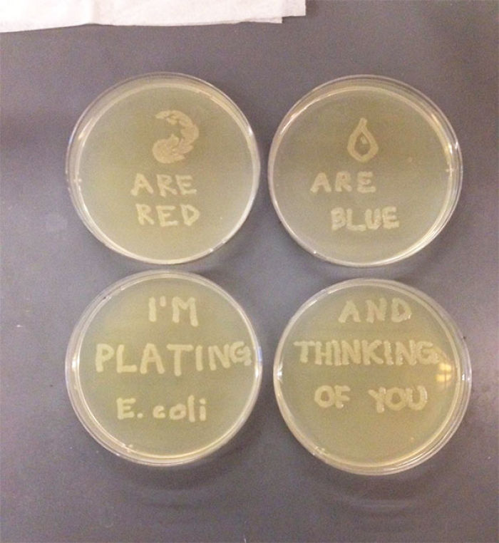 My Girlfriend Is A Microbiologist. She Just Sent Me This Valentine