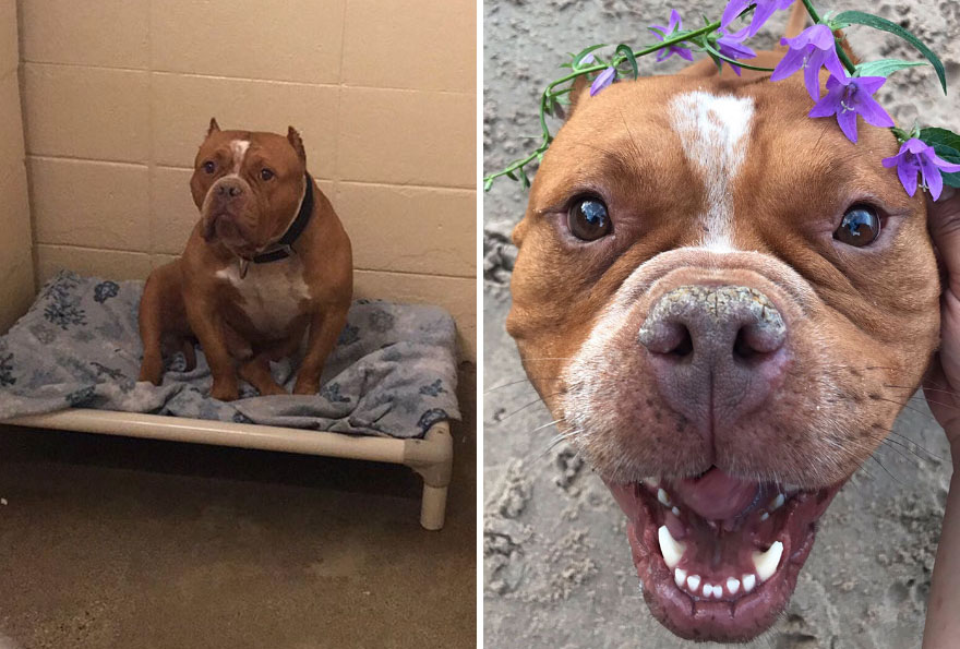So My Sis Adopted Her Very First Dog And His Before And After Pics Have Me Crying