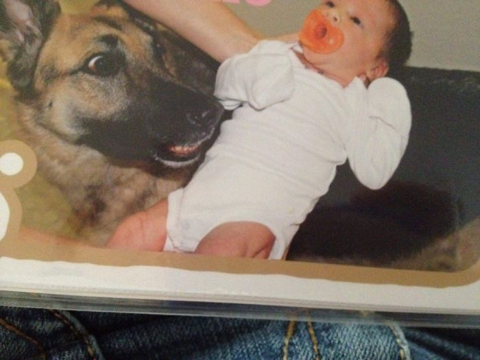 The Day Our German Shepherd Maya Met Our Newborn Daughter 6 Years Ago. Her Face Is Priceless.