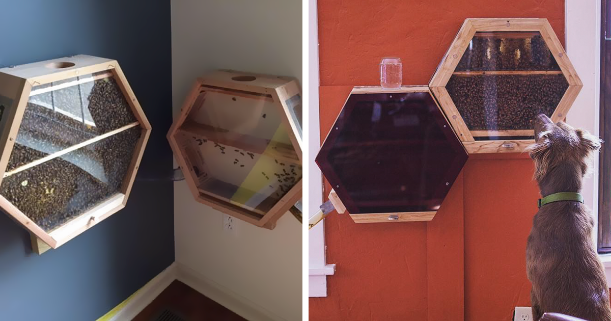 Genius Company Installs Beehives In Your Living Room, And Here's How It Works