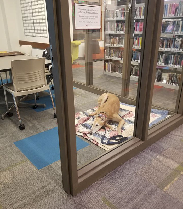 Nobody Shows Up To Read For Retired Greyhound Racer, So Internet Responds In The Best Way