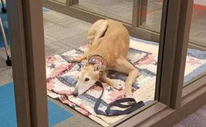 Nadie vino a leerle a este perro de carreras retirado, e internet reaccionó de la mejor manera
