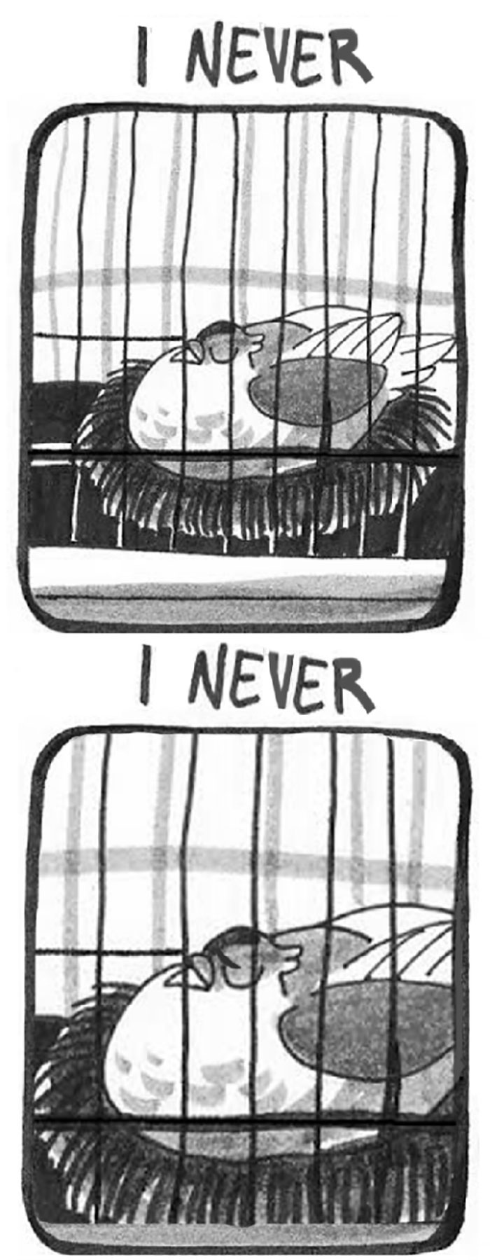 pigeon-comics-mr-brightside-the-killers-(7)
