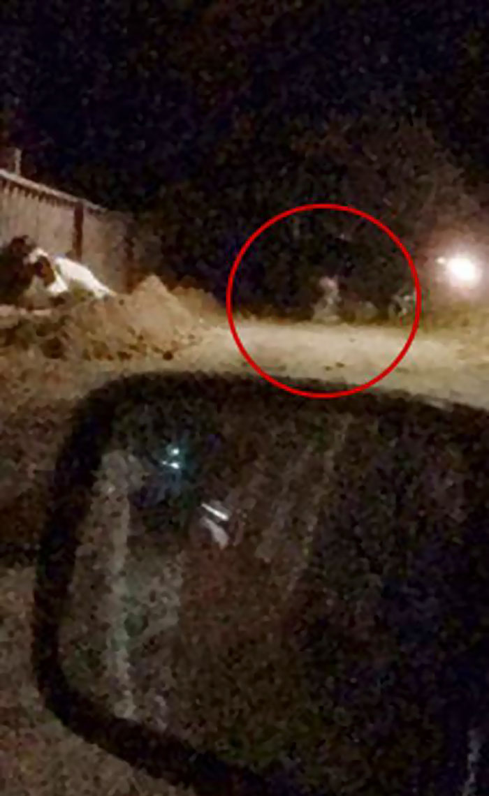 People Are Laughing At Armed Cops Who Had Almost Hour Long Standoff With Tiger Before Realizing It's A Toy