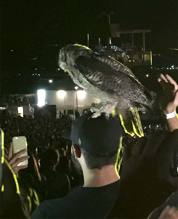 Owl Landed On My Friend's Head At A Luke Bryan Concert