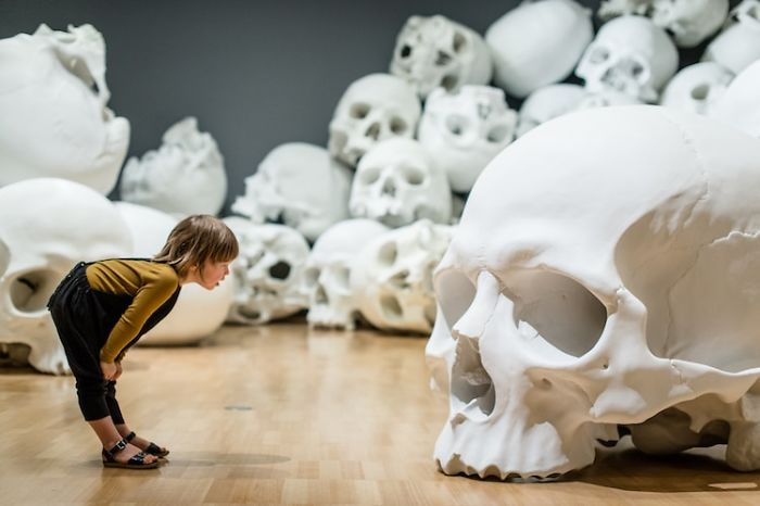 100 Of The Largest Skulls You Have Ever Seen Goes On Display In Australia