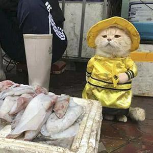 Este es el pescadero más adorable de Vietnam, y está conquistando internet con sus encantadoras fotos
