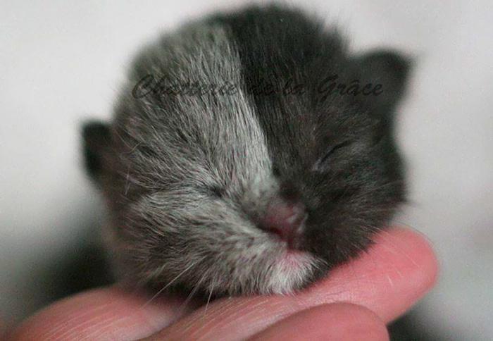 "Este curioso gatito nacido con ""dos caras"" ha crecido hasta convertirse en un gato precioso"