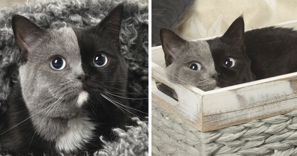 Rare Cat With Two Faces Is Taking Internet By Storm, And Its Photos Are Absolute Purrfection