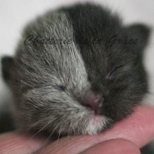 Este curioso gatito nacido con