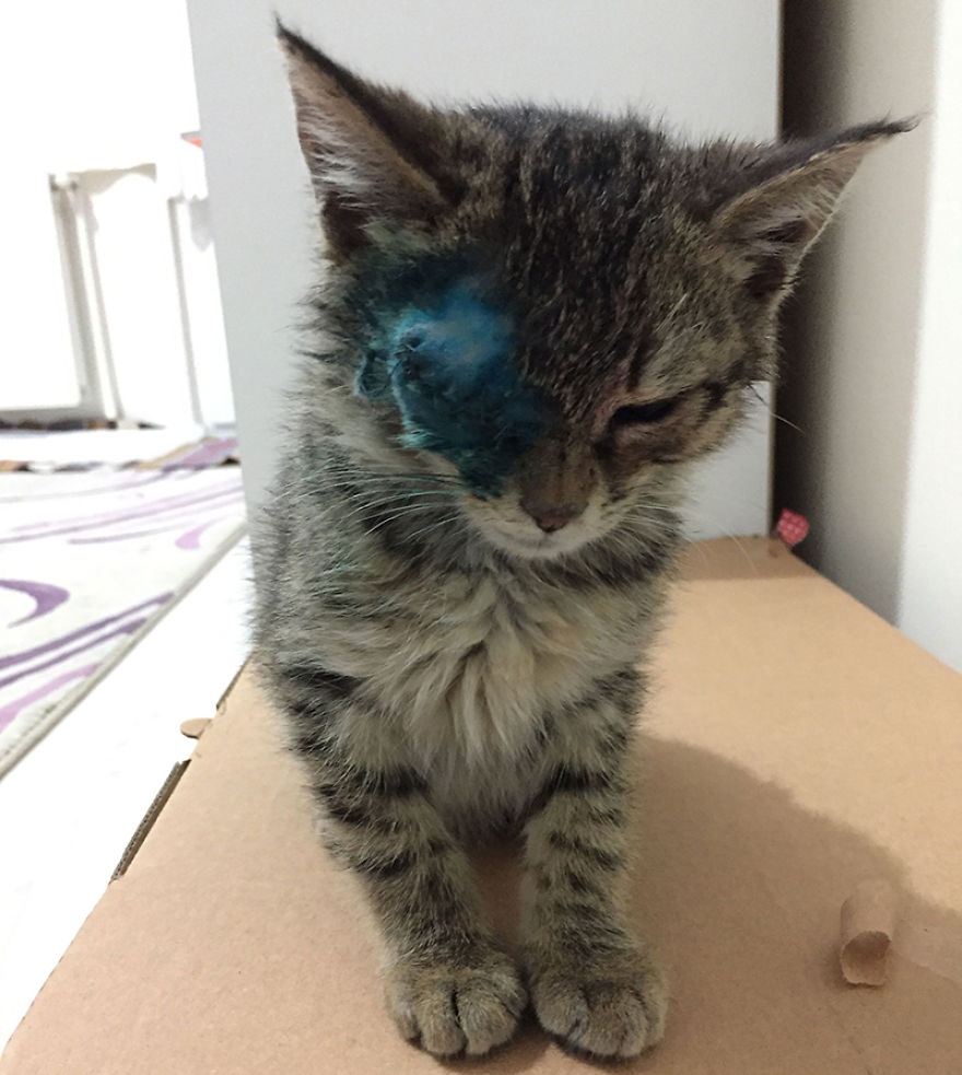 Guy Finds A Dying Kitten With Only One Eye In The Streets, Does Everything He Can To Save Her Life