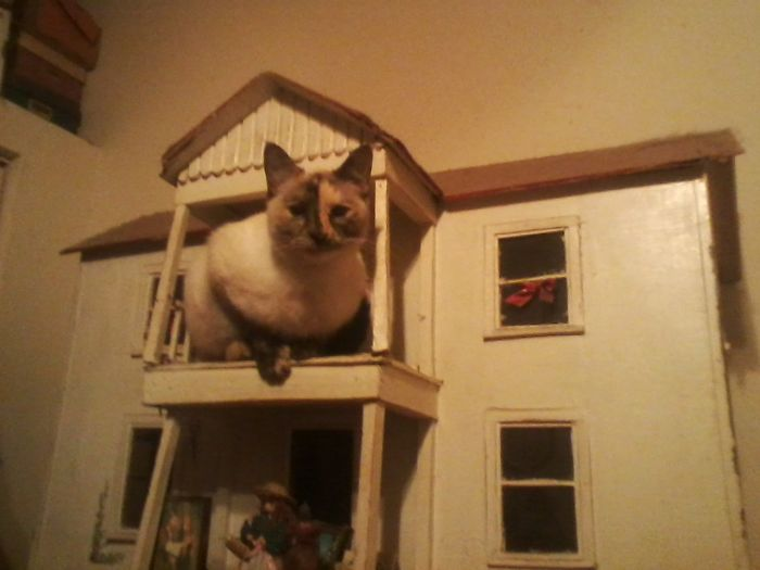 She Actually Climbed Inside, Thru A 3×4 Opening (Same Size As Windows). And Back Out Again