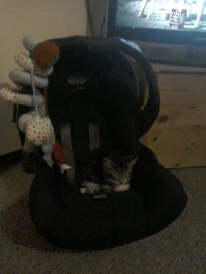 No Human, You Cannot Transport Your Infant Child, This Car Seat Is Mine Now.