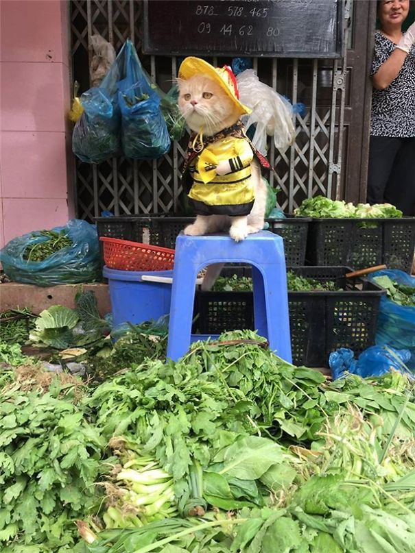 Meet The Cutest Fish Vendor In Vietnam Who Is Taking The Internet By Storm With His Adorable Pics