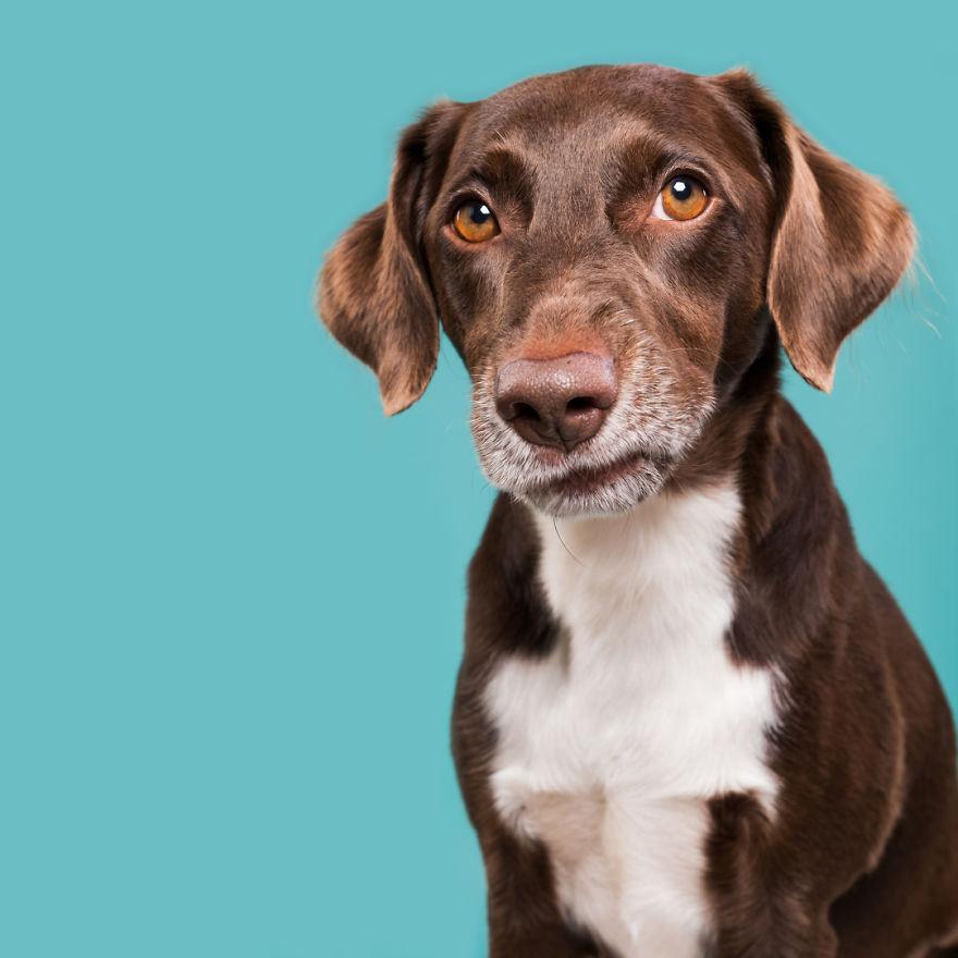 curiosas fotos de perros Sniffy Karlo