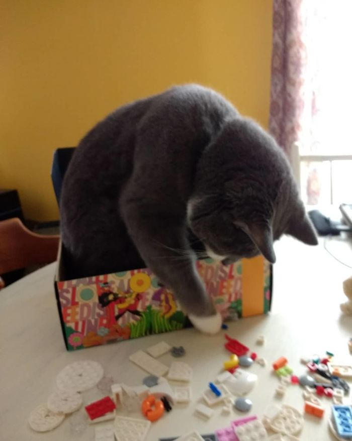 I'm A Very Good Lego-Building Helper